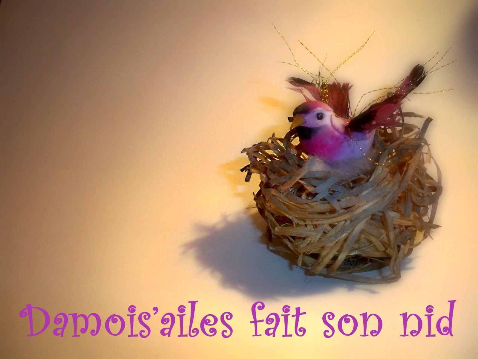 damoisailes-fai3