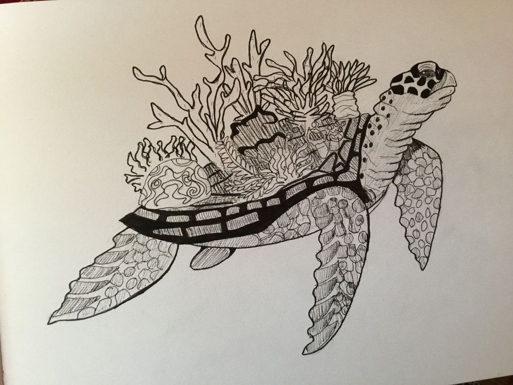 Jour 20 : corail