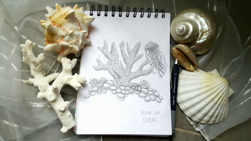 Jour 20 - Coral