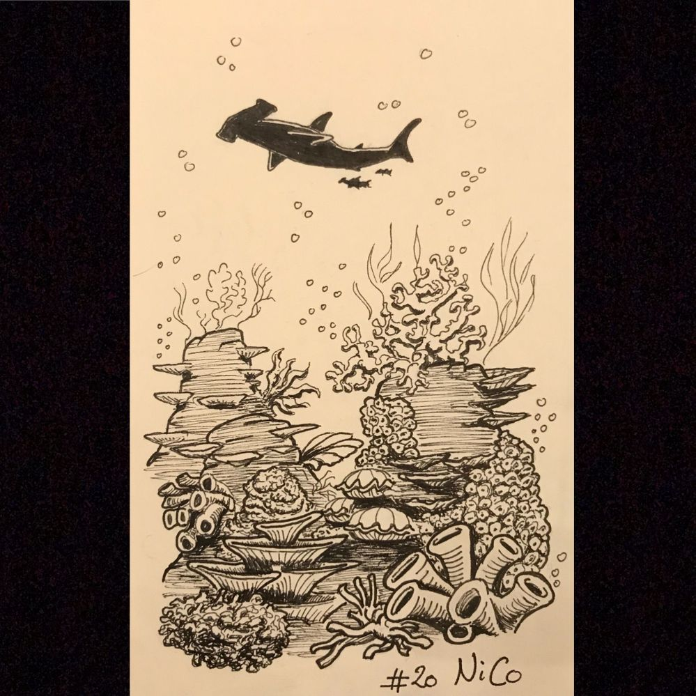 Jour 20 : Coral