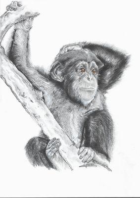 chimpanzé graphites