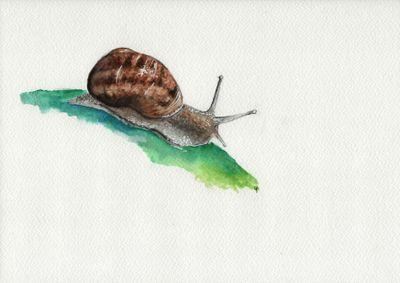 escargot aquarelle
