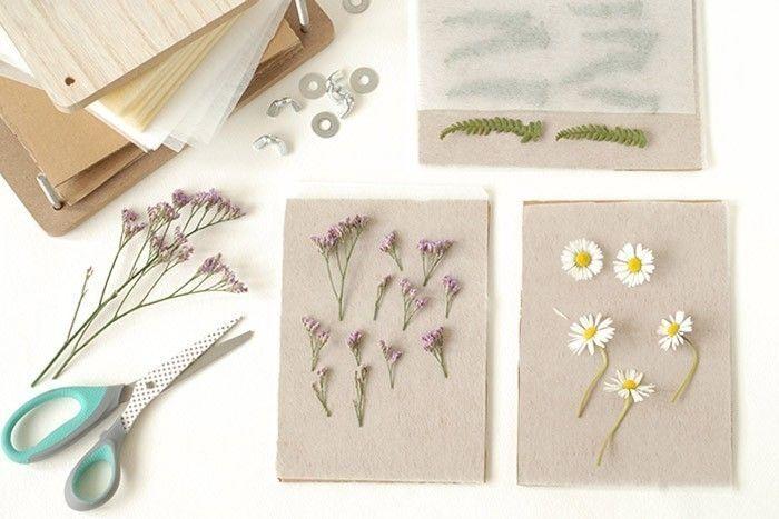 ETAPE 3/9 Faire sécher des fleurs avec l'herbier Ouvrir l'herbier. Placer une feuille de papier fin sur un carton. Positionner la fleur à sécher. Retailler la tige si besoin. Recouvrir d'une seconde feuille de papier fin. Renouveler l'opération pour toutes les fleurs à sécher. Empiler les planches en carton les unes sur les autres.