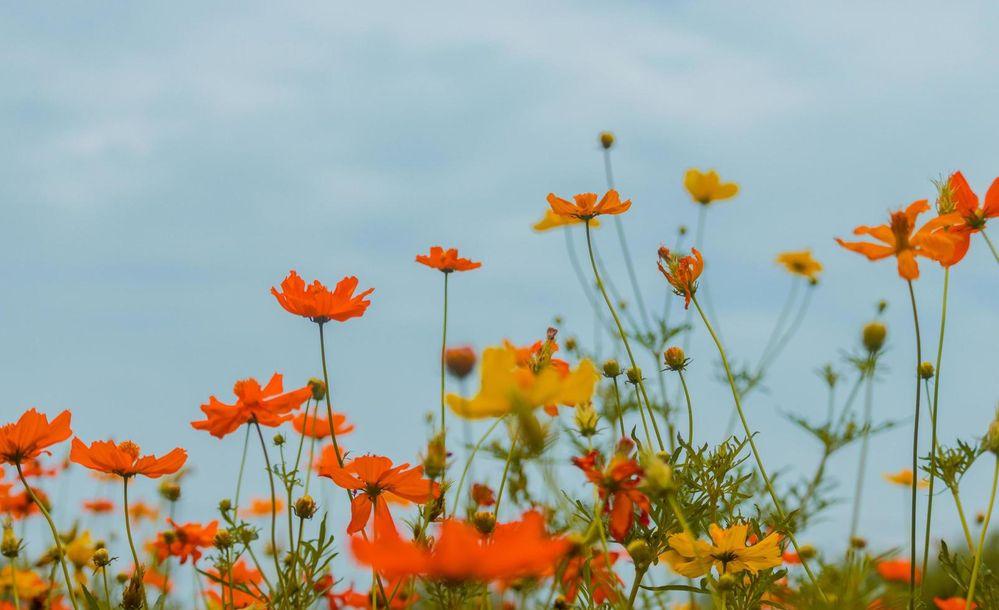 1231721-belles-fleurs-epanouies-gratuit-photo.jpg