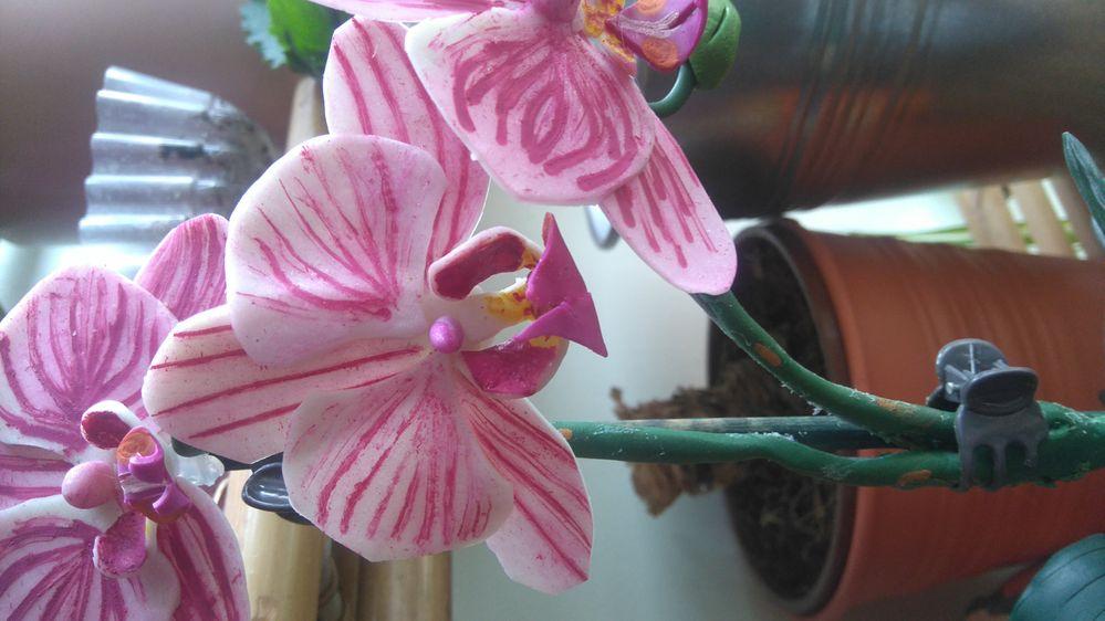 Zoom fleurs