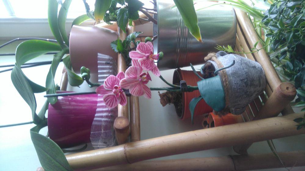 Plante en fimo parmis les vrai plantes