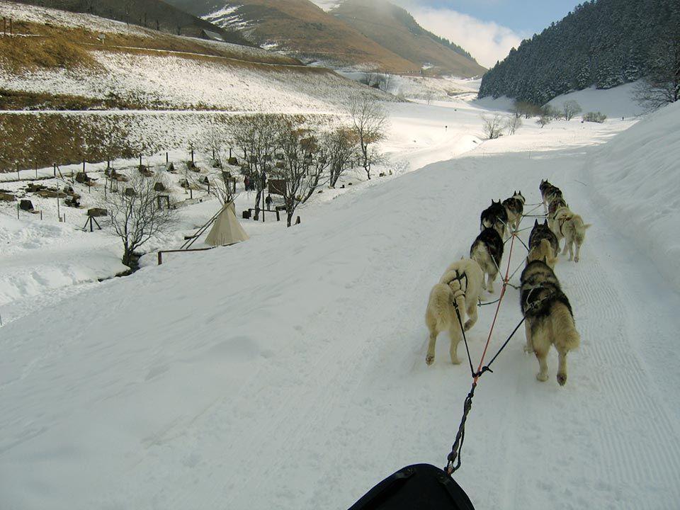 conduite-attelage-chiens-traineau-sherpa.jpg