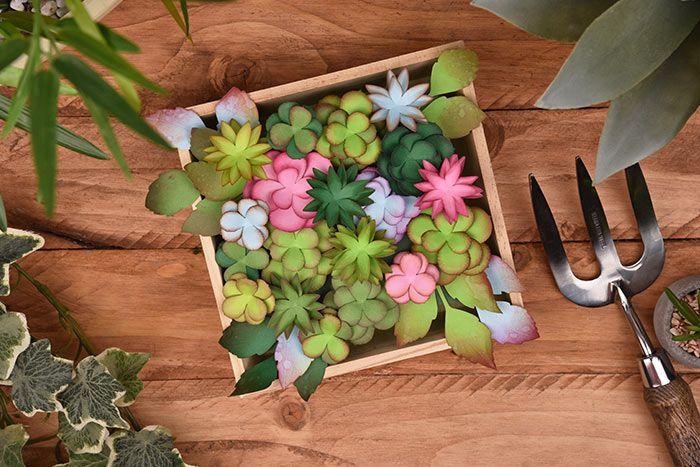 cadre_vegetal_succulentes.jpg