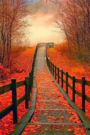paysage d'automne promenade.jpg