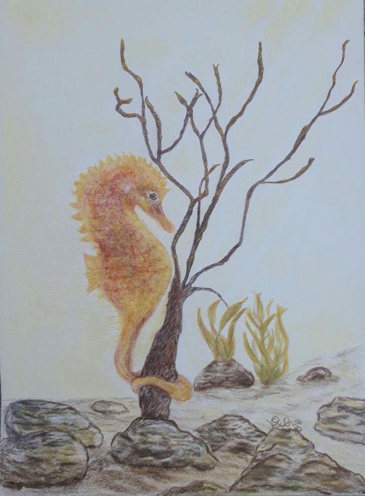 Petit roi des mers au crayon aquarellable