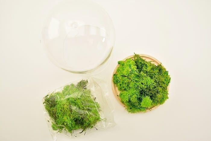 1. Ouvrir la cloche et déposer la mousse végétale sur son socle.