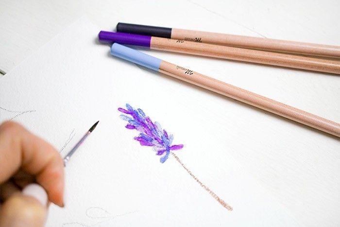 ETAPE 4/9 Colorier les végétaux. Pour les fleurs, mettre différentes couleurs sur les pétales