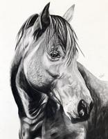 Horse.jpg.png
